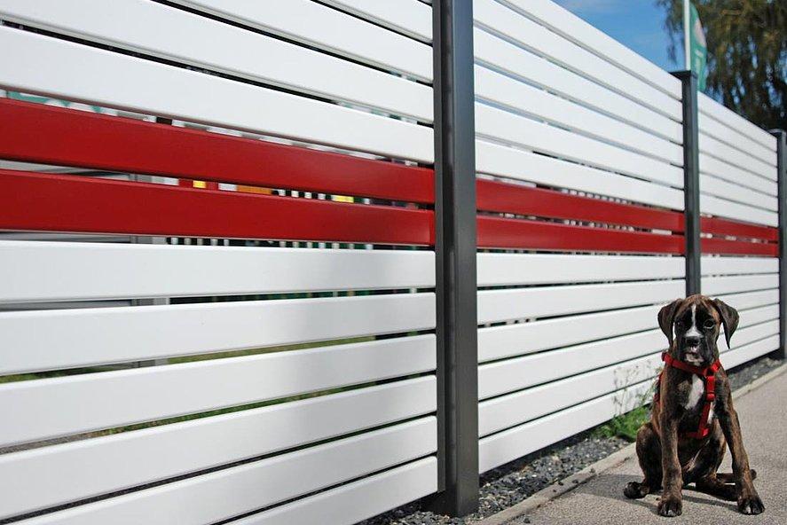 Clôture occultante - clôture de jardin à lattes en aluminium blanc avec un accent rouge, derrière laquelle se trouve un chien